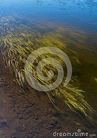 Free Sea Grass At Shore Royalty Free Stock Image - 56413156