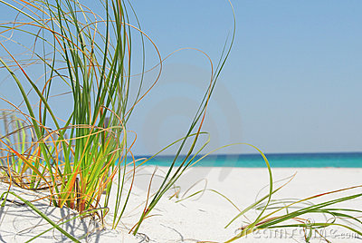Sea grass on Pensacola Beach
