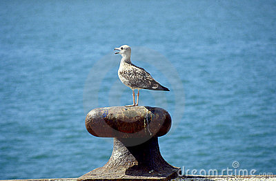 Sea-gull 2