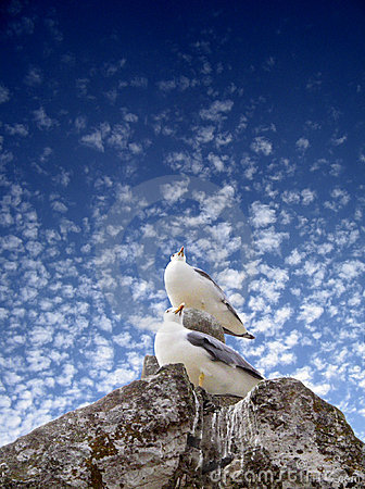 Free Sea-gull Stock Images - 882344