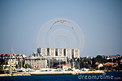 Sea gull flying near Zadar