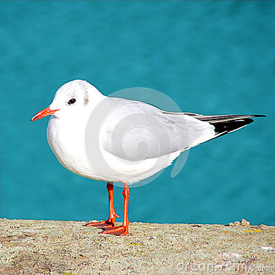 Free Sea Gull Sitting On Concrete Royalty Free Stock Photography - 27940077