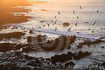 Sea-gull in sunset