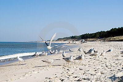 Sea gulls on beach.