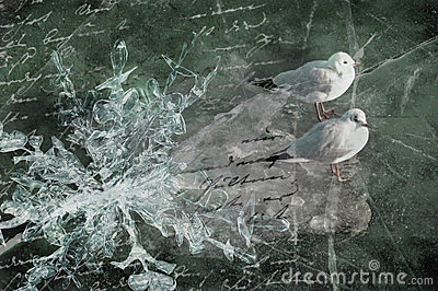 Sea-gulls, ice floe and poem