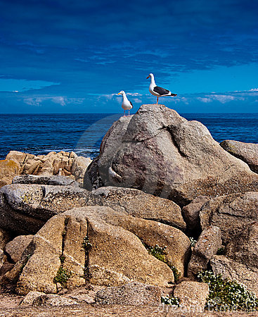 Free Sea Gulls Perched On A Rocky Royalty Free Stock Photography - 14075957