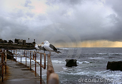 Sea Gulls and Storm