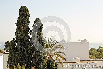 Sea, horizon, palms and white buildings