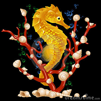 Free Sea Horse Royalty Free Stock Photos - 14217948