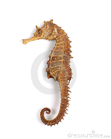 Sea Horse (with clipping path)