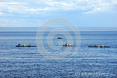 Sea kayakers and minke whale Editorial Photography