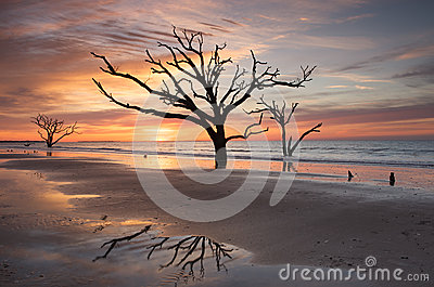 Charleston SC Botany Bay Sunrise Tree on Beach
