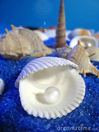 Free Sea Life Royalty Free Stock Image - 5891496