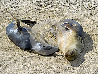 Sea-lion 1
