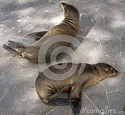 Sea-lion 3
