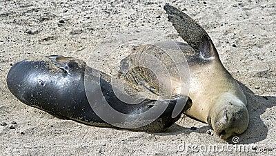 Sea-lion 5