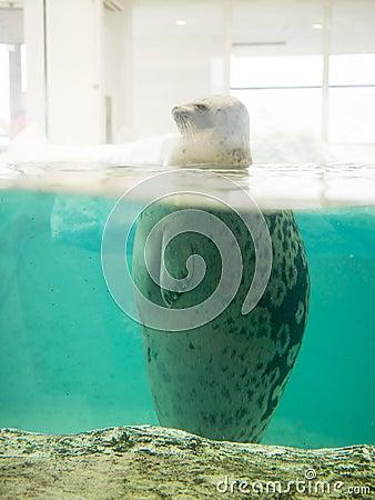 Free Sea Lion In Osaka Aquarium Kaiyukan (Ring Of Fire Aquarium) Stock Photo - 46786540