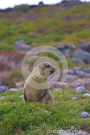Sea lion landscape