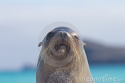 Sea Lion Look