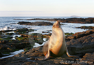 Sea Lion on the Shore