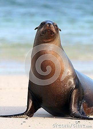 Sea Lion Stares