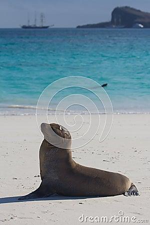 Sea lion view