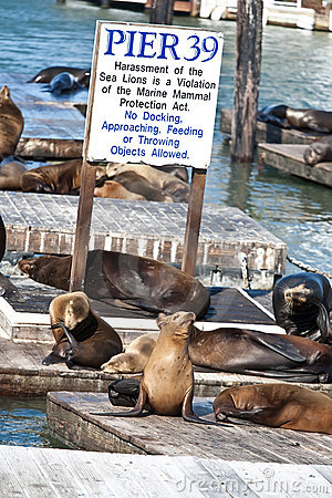 Free Sea Lions Stock Images - 14310824
