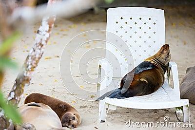 Sea lions at beach