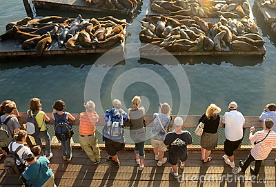 Sea Lions near San Francisco s Pier 39 Editorial Image