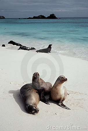 Free Sea Lions On Beach Royalty Free Stock Photo - 2689025