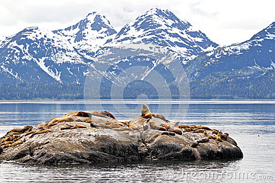 Sea Lions on rock with mountains