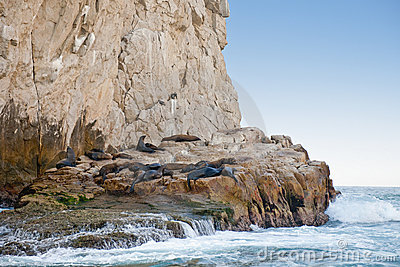 Sea lions on rocky shoreline