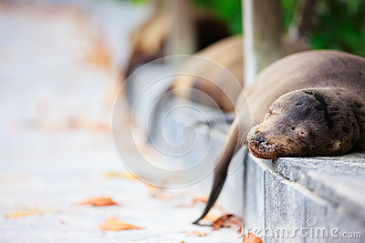 Sea lions sleeping along a road