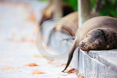 Sea lions sleeping along a road