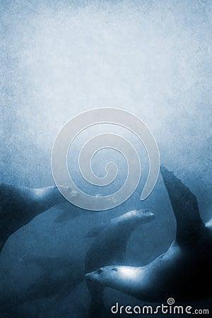 Free Sea Lions Texture Royalty Free Stock Photos - 4643168