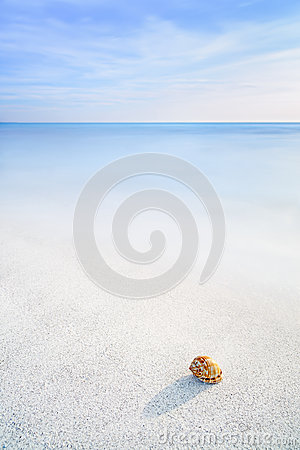 Free Sea Mollusk Shell In A White Tropical Beach Under Blue Sky Royalty Free Stock Photo - 30457325
