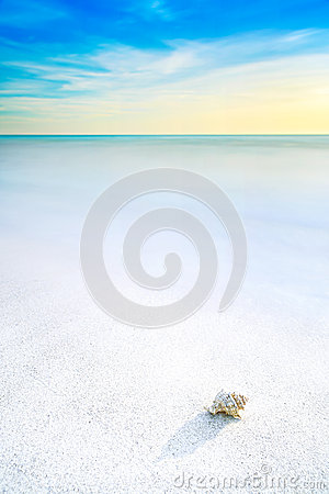 Free Sea Mollusk Shell In A White Tropical Beach Under Blue Sky Royalty Free Stock Images - 30565079