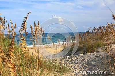 Sea Oats  and Beach
