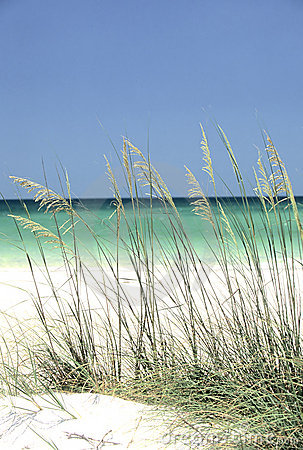 Sea Oats On A Tropical Beach