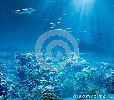 Sea or ocean underwater, shark and sunk treasures