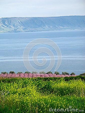 Free Sea Of Galilee Stock Image - 2471071