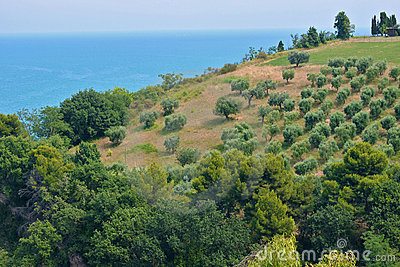 Sea and Olive trees