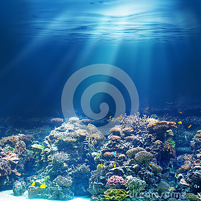 Free Sea Or Ocean Underwater Coral Reef Snorkeling Or Diving Royalty Free Stock Photography - 39769167