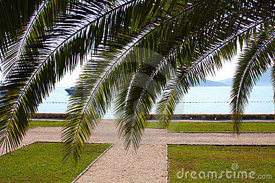 Sea ​​through the palm leaves