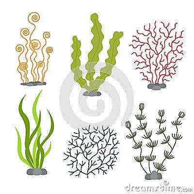 Free Sea Plants And Aquatic Marine Algae. Seaweed Set Vector Illustration Stock Photo - 96140500