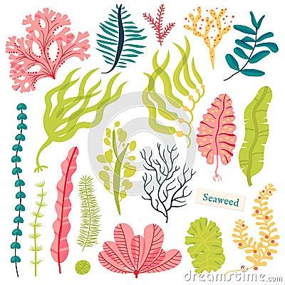 Free Sea Plants And Aquatic Marine Algae. Seaweed Set Vector Illustration Isolated On White. Stock Image - 94129211