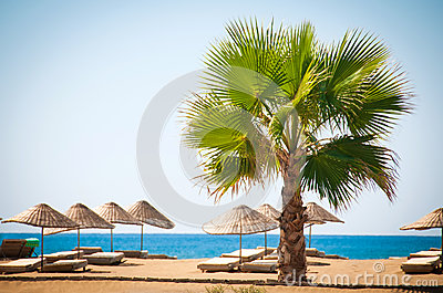 Sea resort, scenic sandy beach with palm trees