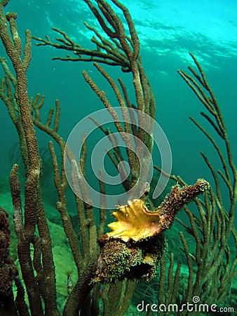 Sea Rod