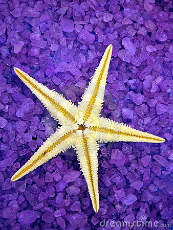Sea salt and starfish