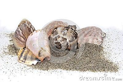 Sea sand shells